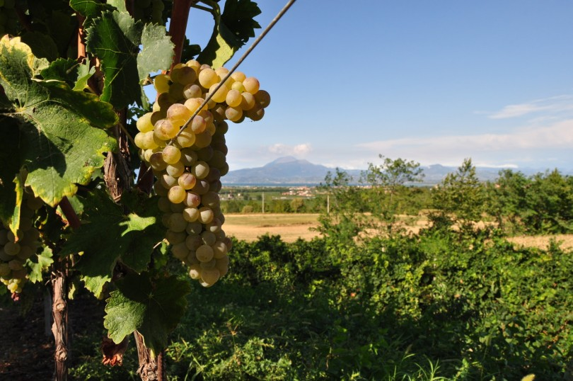lugana-wine-lovers
